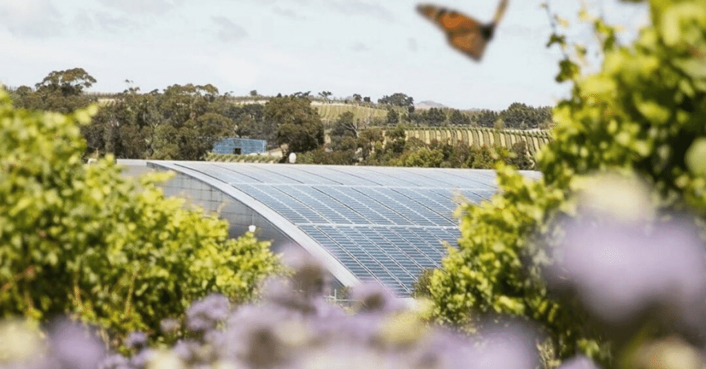 Eco-Friendly Yealands Winery with Solar Panels and Surrounded by Vines